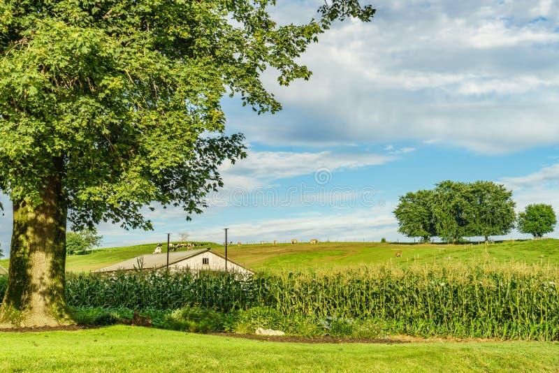 Jordbruk och slangar för fält för Amish landslantgård i Lancaster, PA arkivbild