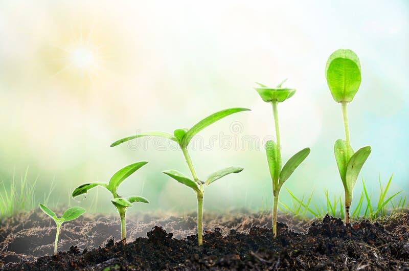 Jordbruk växande växter Växtplanta Handen som fostrar och bevattnar som är ung, behandla som ett barn växter som växer i groendef arkivfoton