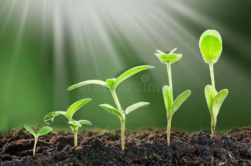 Jordbruk växande växter Växtplanta Handen som fostrar och bevattnar som är ung, behandla som ett barn växter som växer i groendef arkivbilder