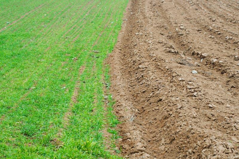 jordbruks- bakgrundsfält arkivbild