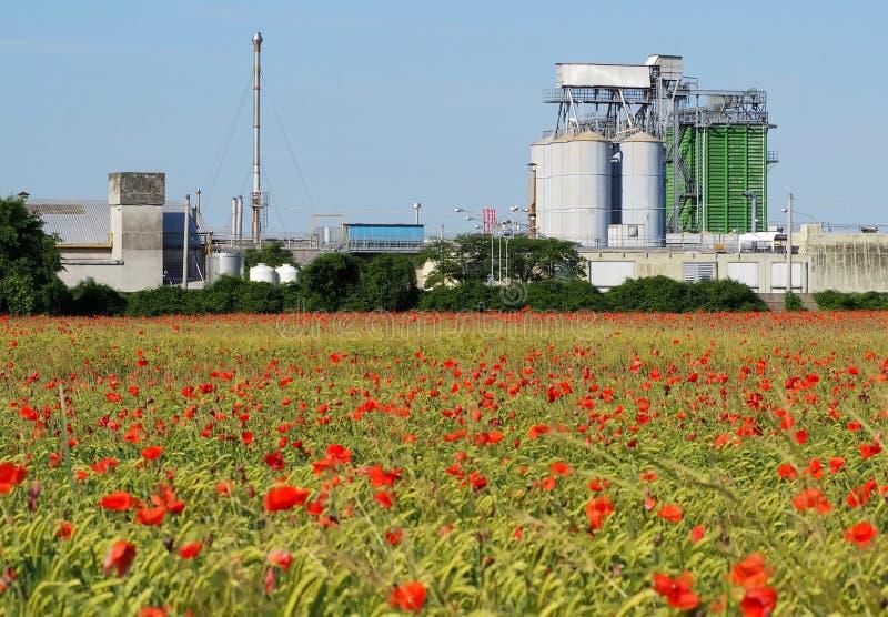 Jordbruks- byggnader med kornsilor och uttorkningtorn bak ett stort vetefält med mycket röda vallmo arkivfoton