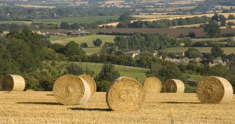 jordbruks- cornfieldhaybalesliggande royaltyfri bild