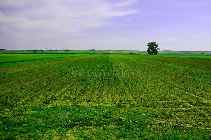 jordbruks- fält arkivbild