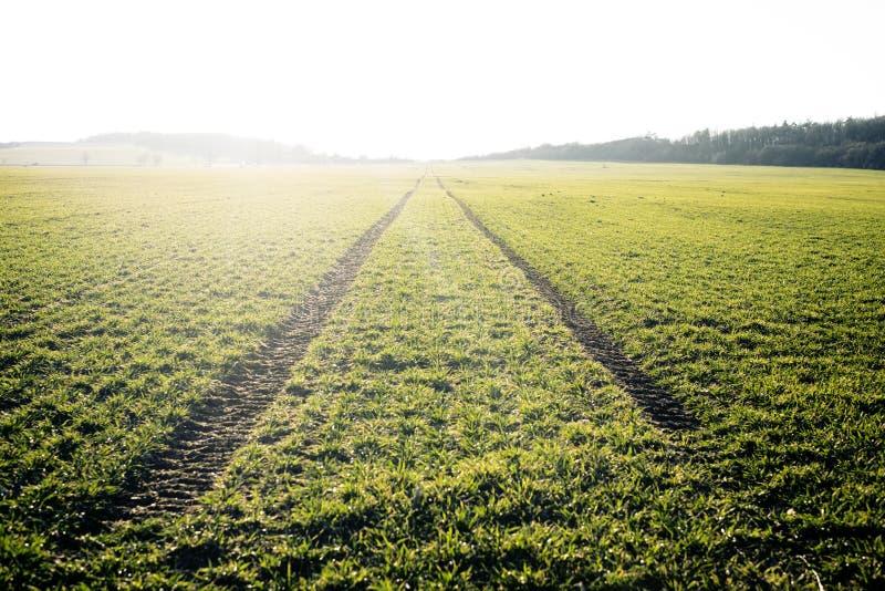 jordbruks- fält Fjädra den tid… ron lämnar, naturlig bakgrund Spår i land från traktoren Solnedgång royaltyfria foton