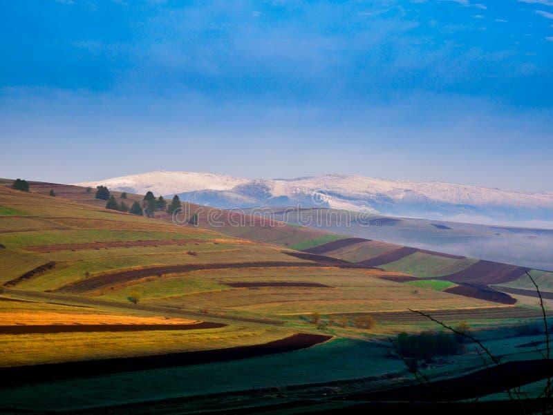 Jordbruks- fält med sörjer trän på en kall vårmorgon arkivfoto