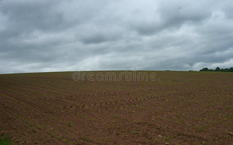 Jordbruks- fält med små havre som växer, och molnig himmel royaltyfria foton