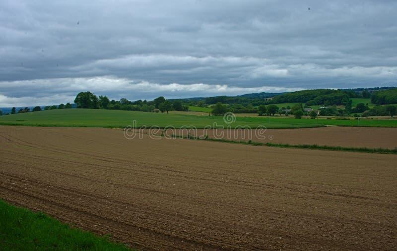 Jordbruks- fält med små havre som växer, och molnig himmel royaltyfria bilder