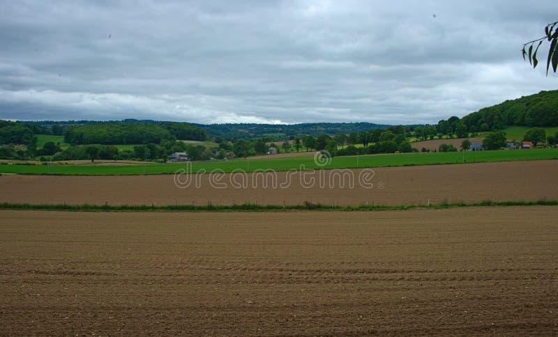 Jordbruks- fält med små havre som växer, och molnig himmel royaltyfri foto