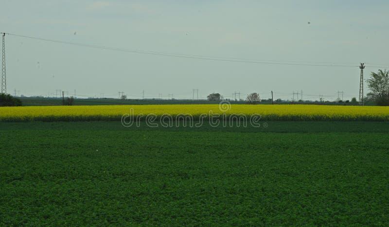 Jordbruks- fält med sojabönor och canola på en molnig dag royaltyfria bilder