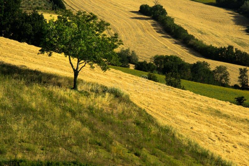 Jordbruks- fält odlade och plogade med områden av grönt och gult royaltyfri bild