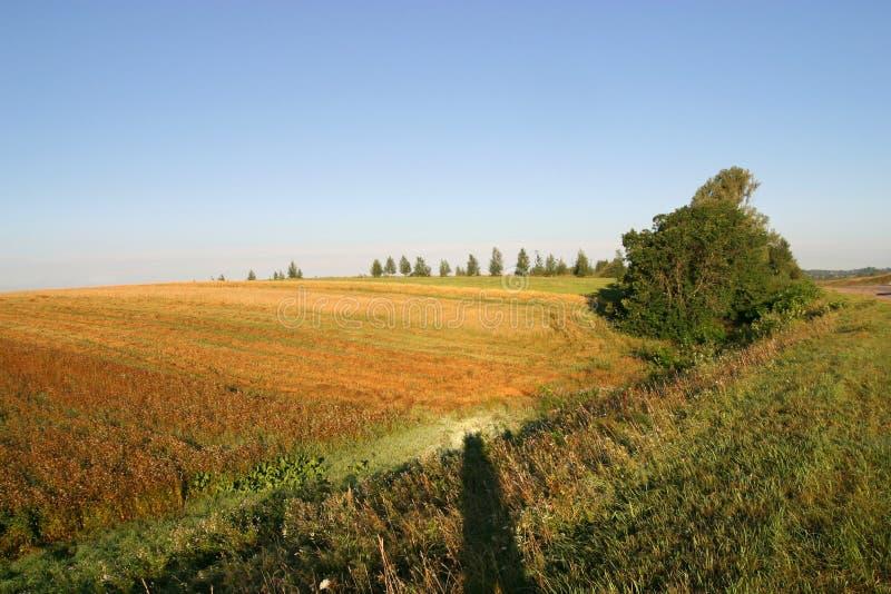jordbruks- höstfält arkivbild