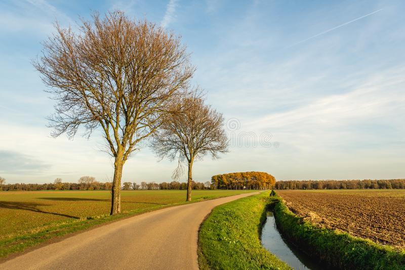Jordbruks- holländskt polderlandskap i höst med ett plogat fält och två kala träd bredvid en krökt landsväg Det är ett soligt royaltyfri fotografi