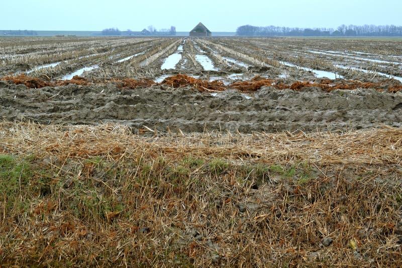 Jordbruks- land i vintern. fotografering för bildbyråer