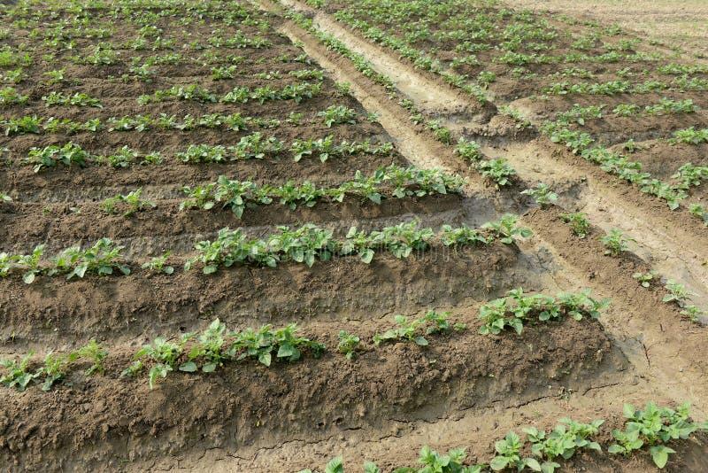 Jordbruks- land med rad royaltyfri bild