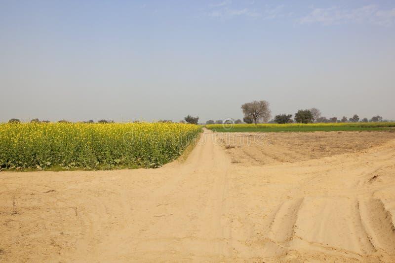 Jordbruks- landskap av rajasthan arkivfoto