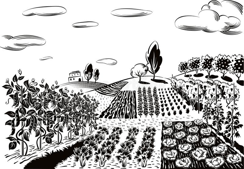 Jordbruks- landskap som är kultiverat med olika grönsaker vektor illustrationer