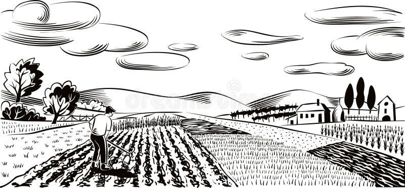 Jordbruks- landskap som är kultiverat med olika grönsaker stock illustrationer
