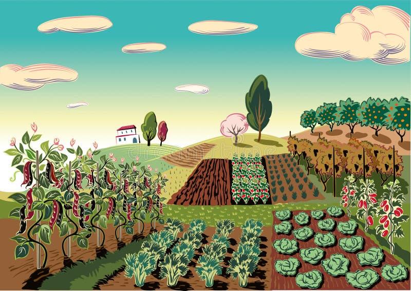 Jordbruks- landskap som är kultiverat med olika grönsaker royaltyfri illustrationer