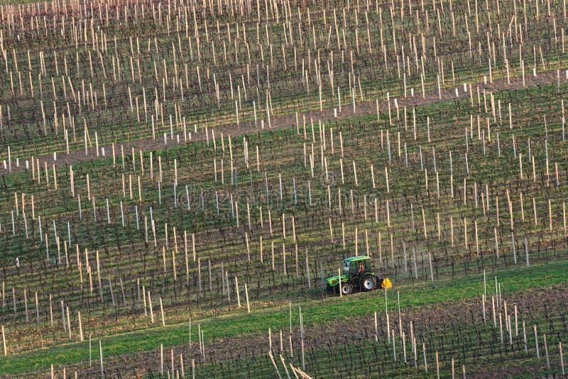 Jordbruks- lantlig plats för vår med den lilla traktoren och rader av vingårdar En grön traktor odlar vingårdkolonierna Mo royaltyfri foto