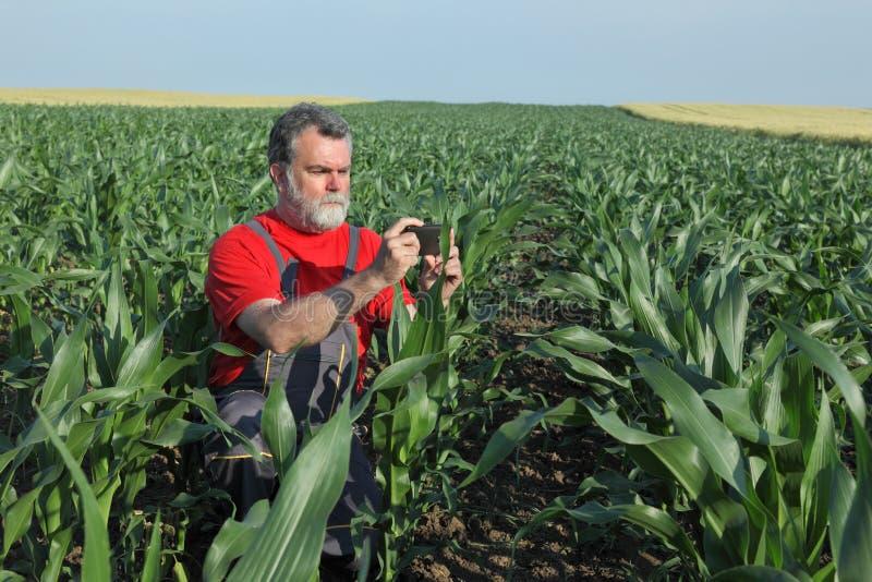Jordbruks- plats, bonde i havrefält arkivfoton