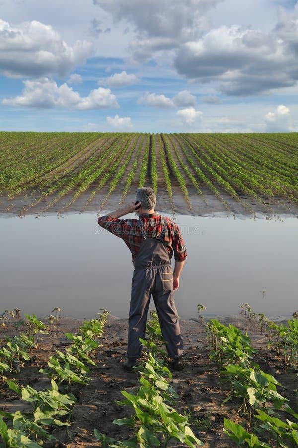 Jordbruks- plats, bonde i solrosfält efter flod arkivfoton