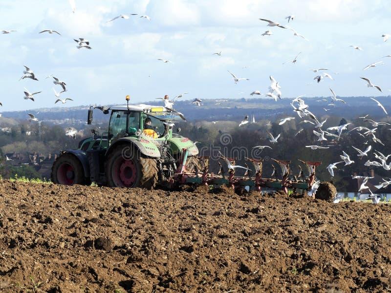 Jordbruks- traktor som plogar fältet med fiskmåsar i uppslutning arkivbilder
