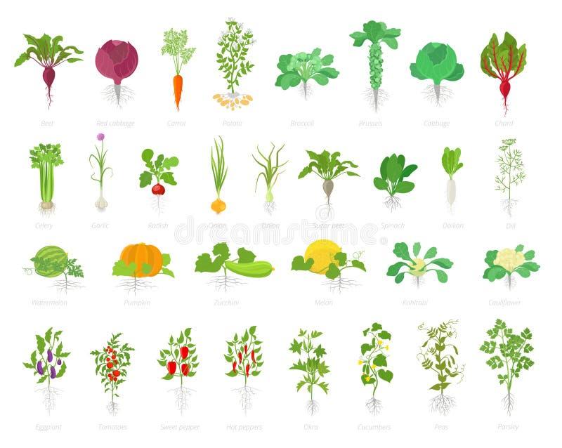 Jordbruks- växtsymbolsuppsättning Vektorlantgårdväxter Vitlök för selleri för potatisar för betakålmorötter och många  stock illustrationer