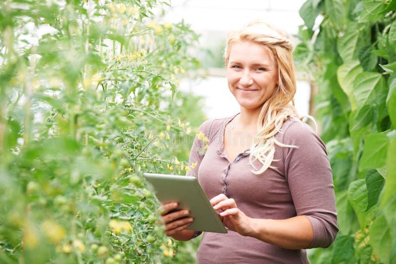 Jordbruksarbetare i växthus som kontrollerar tomatväxter genom att använda Digital T royaltyfri bild