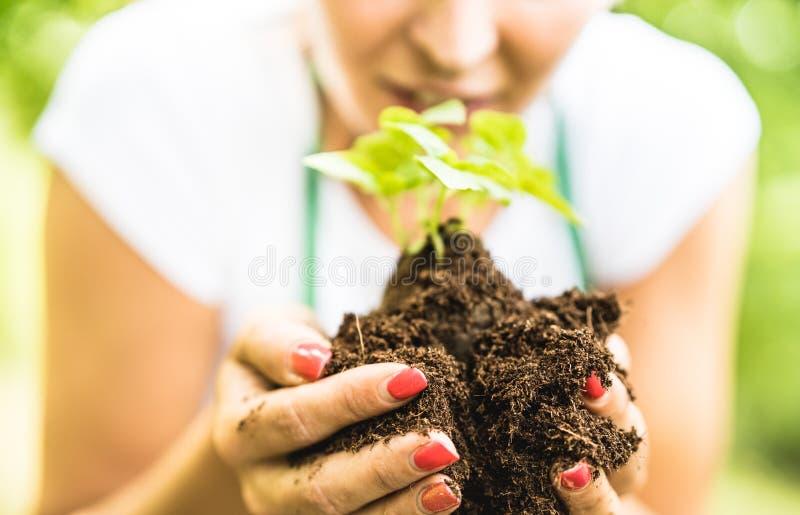 Jordbruksarbetare som tar omsorg på den lilla basilikaväxten på den alternativa lantgården royaltyfri foto