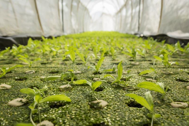 Jordbruksmark för grönt hus royaltyfri foto