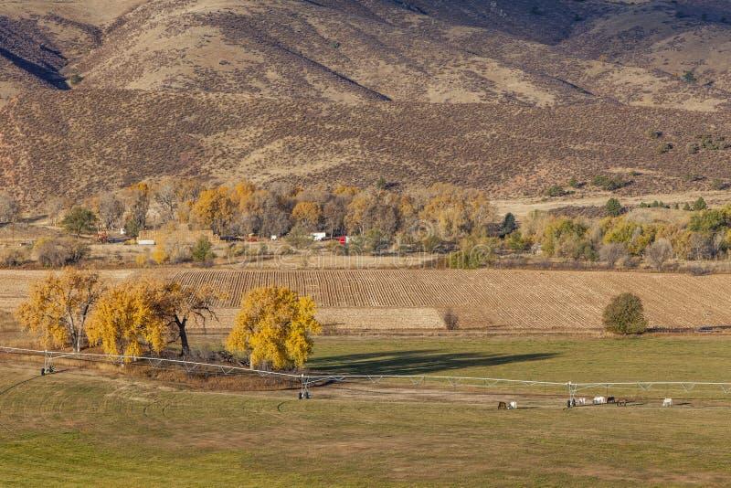 Jordbruksmark på Colorado foothills royaltyfri foto
