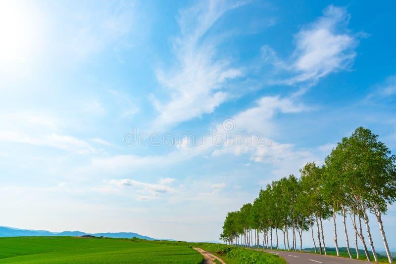 Jordbruksmark rad av träd på kullen med bakgrund för blå himmel i solig dag fotografering för bildbyråer