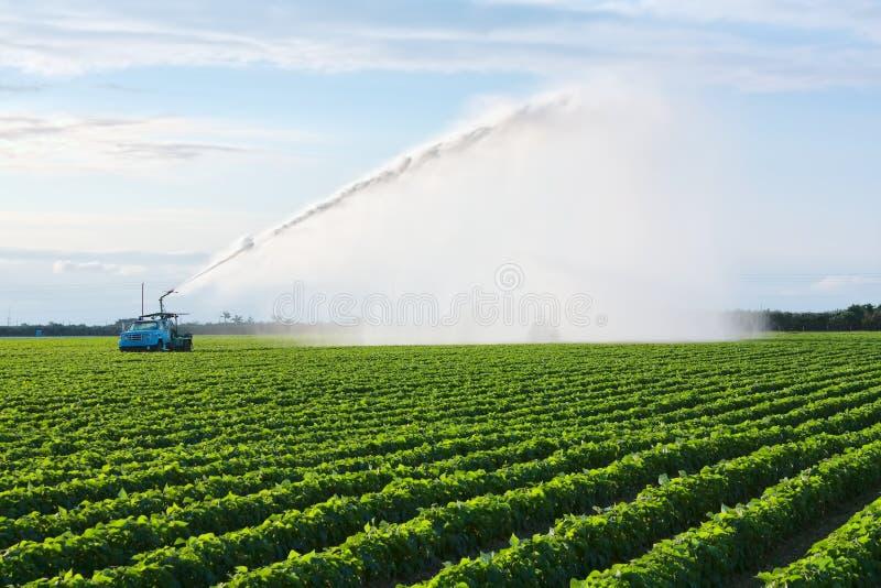 jordbruksmarkbevattning royaltyfri bild