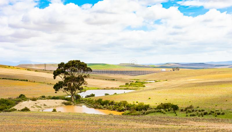Jordbruksområdet Karoo Semi-öknen i Sydafrika royaltyfria bilder