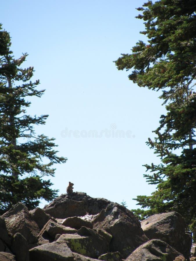 Jordekorre på toppiga bergskedjan Buttes royaltyfri foto