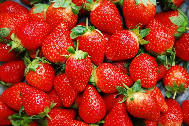 jordgubbar royaltyfri fotografi