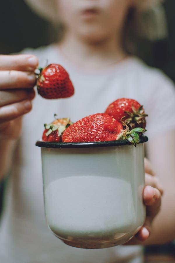 Jordgubbar i barnh?nder Flickabarn som rymmer nya röda organiska jordgubbar i den vita emaljerade koppen sommarvitaminer arkivfoto