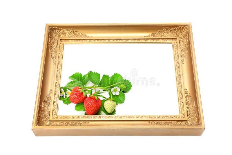 Jordgubbar i ramen för en bild royaltyfria bilder