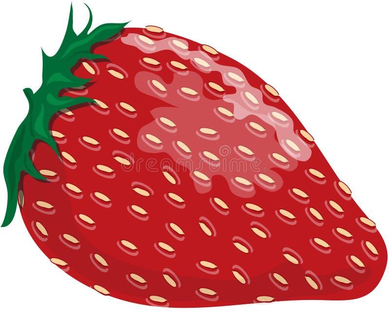 jordgubbe stock illustrationer