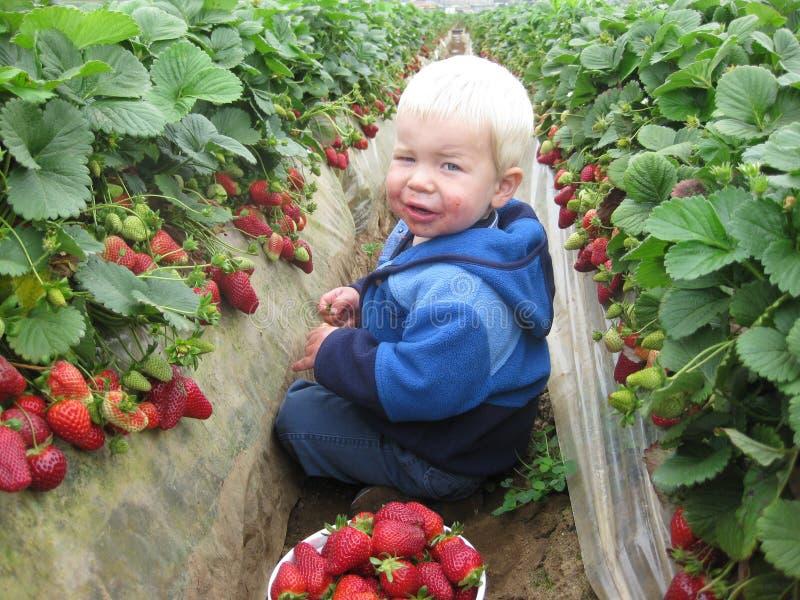 jordgubbe för 3 fält arkivfoto