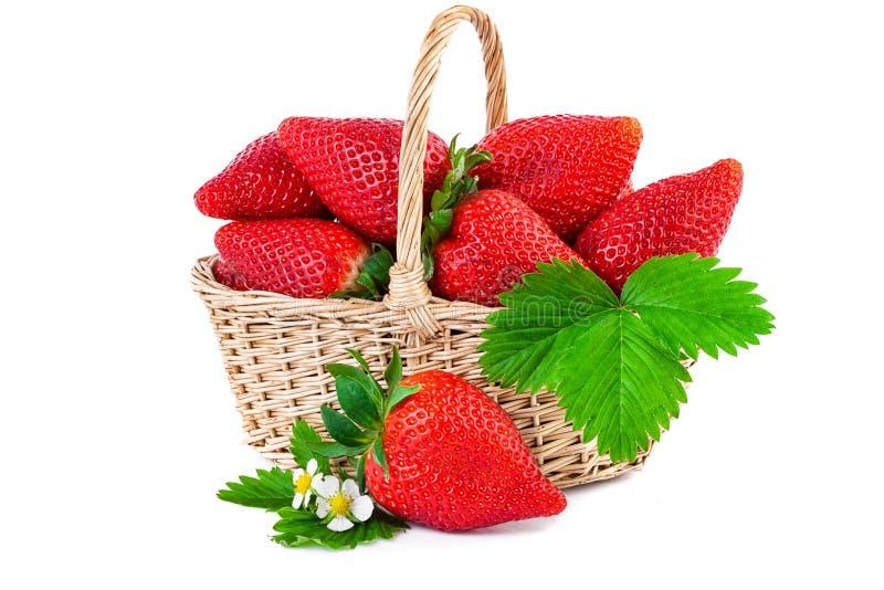 Jordgubbekorgcloseup vita nya isolerade jordgubbar för bakgrund arkivfoto