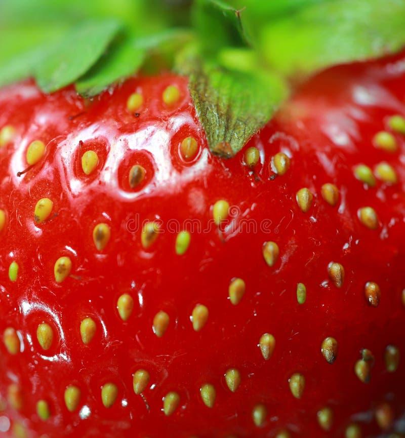 jordgubbetextur arkivbild