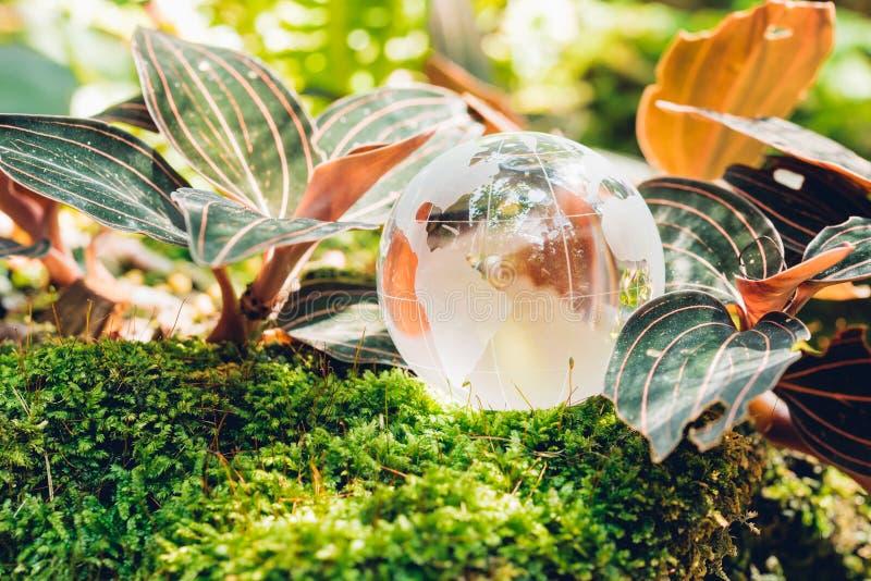 Jordklotexponeringsglas i grässkog på naturbakgrund royaltyfri fotografi