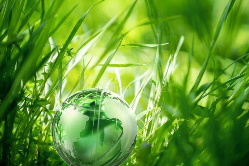 Jordklotexponeringsglas i härligt grönt gräs milj?n f?r bakgrundsomsorgsbegreppet isolerade liten taketreewhite royaltyfria bilder