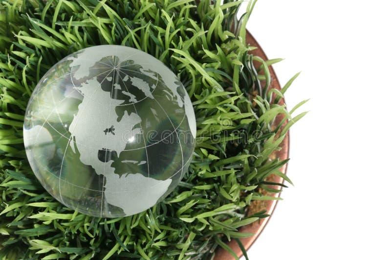 jordklotgräs royaltyfri fotografi