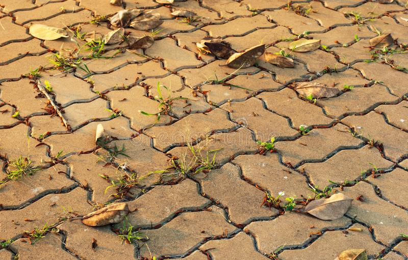 Jordkvarter i aftontid med guld- solsken på det såväl som torkar sidor och växten som försöka att växa upp i mellanrummet arkivfoton