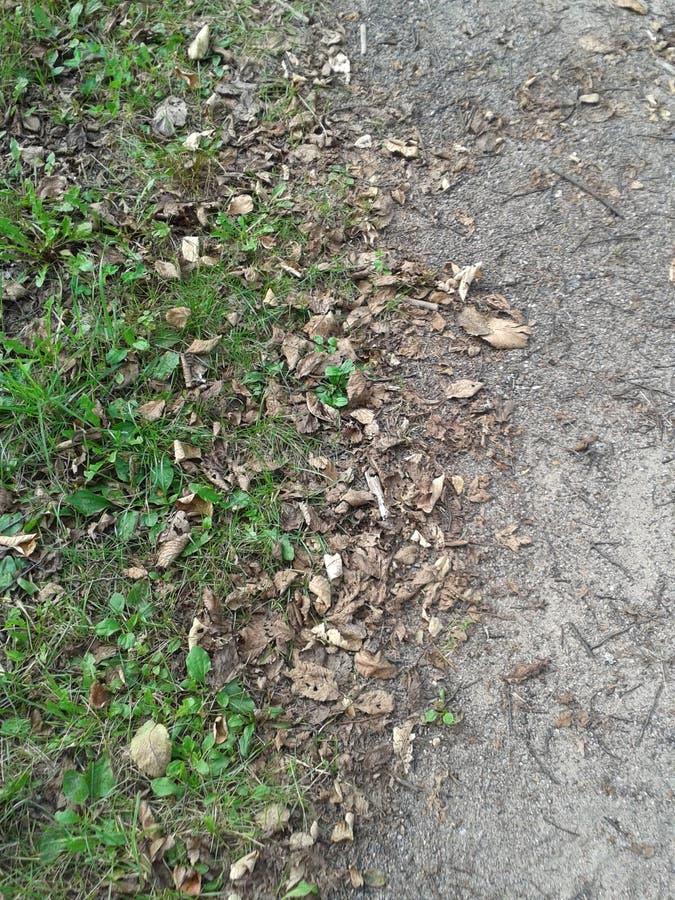 Jordnära jordning 3 royaltyfri foto