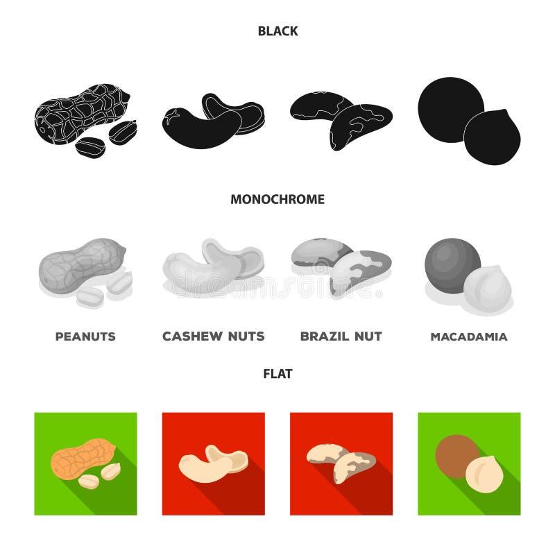 Jordnötter kasjuer, Brasilien muttrar, macadamia Olika sorter av fastställda samlingssymboler för muttrar i svart, lägenhet, mono royaltyfri illustrationer