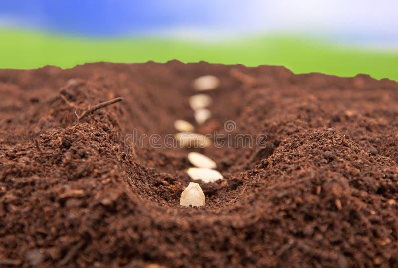 jordning planterat frö royaltyfri foto