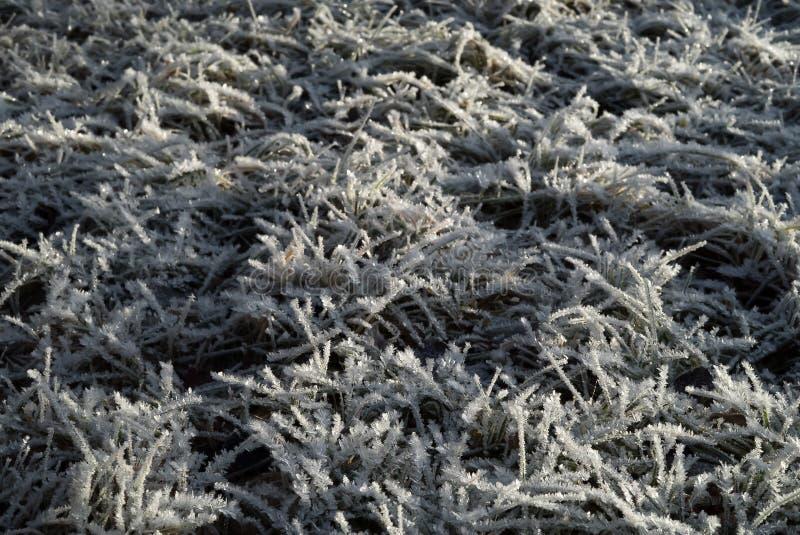 Jordning som täckas, i att moussera hoarfrostvintertid och chipset, frostat gräs med iskalla snökristaller i trädgården en förkyl arkivbild